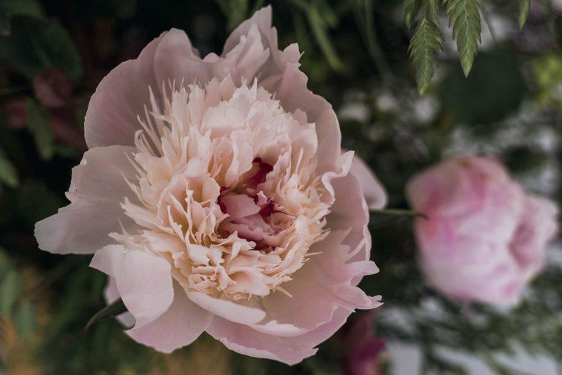 Centro esparto flores naturales Liken Estudio Floral